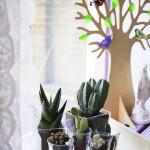 de cactustuin waar ik pas iets over schreef