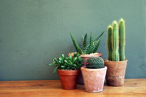 de fijnste kamerplanten voor thuis