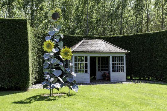 Haag in je tuin